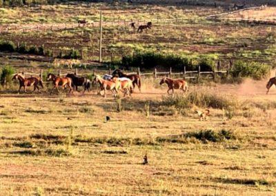 La danza dei cavalli di EquiAzione