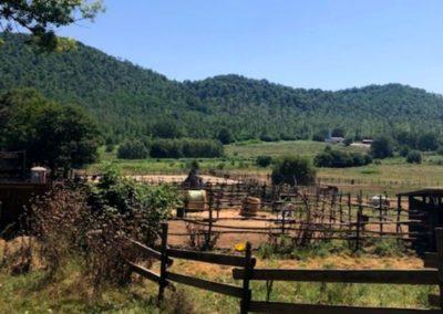 paesaggio prati del vivaro equitazione